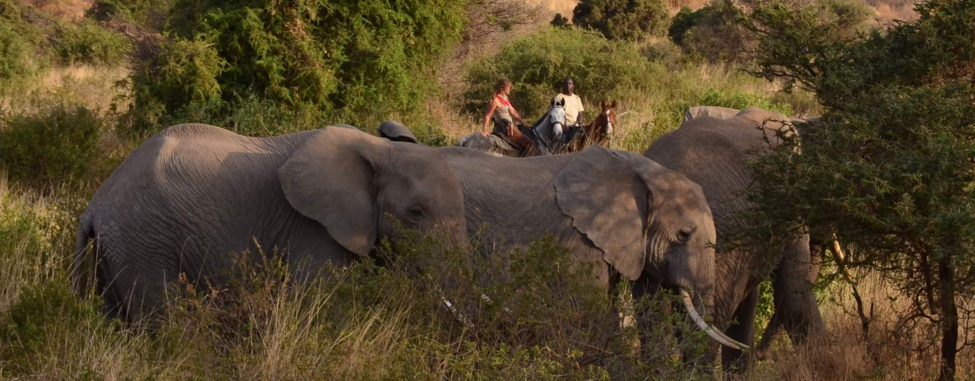 Horseback safari in Tanzania