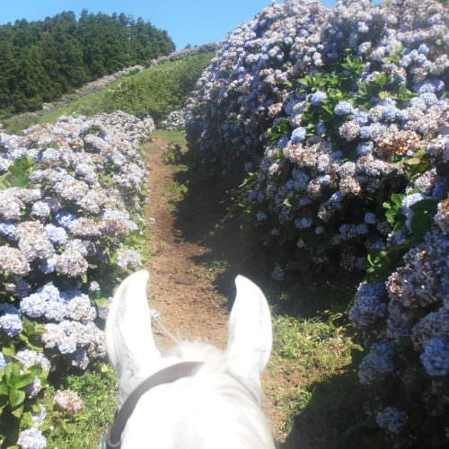 Azores, quinta da terca, riding, hydrangeas