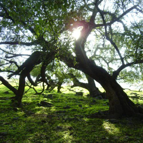 Yaela Grove