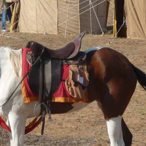 Horse riding in Rajasthan