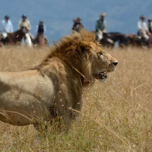 Paardenbasissafari in de Maasai Mara