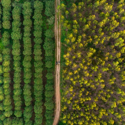 Aerial view of forests in Portugal