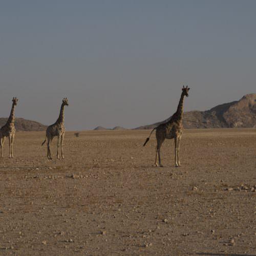 Game sightings Namibia