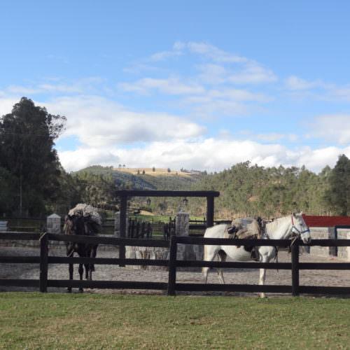 Horses La Merced