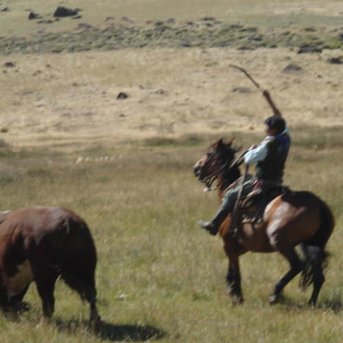 Argentina Gauchos. Horse riding in Argentina. Cattle.