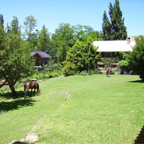 Horses grazing at Estancia Huechahue