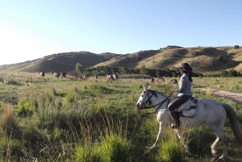 Horses in Argentina.