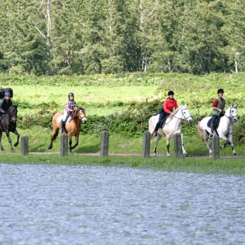 Horses on the Green Island Trail - Riding Holidays on the Azores
