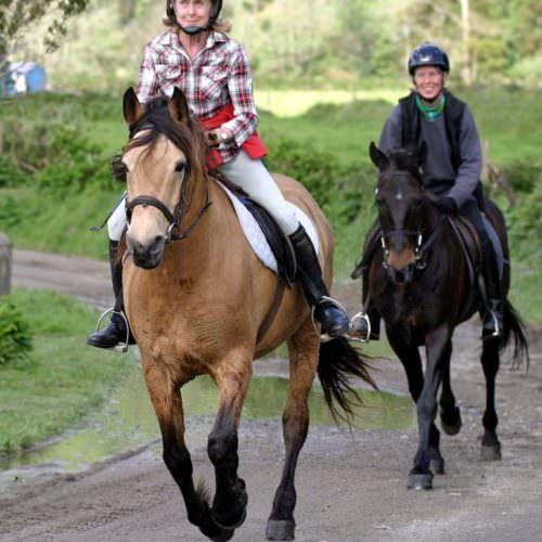 Horses cantering on the Green Island Trail - Riding Holidays on the Azores