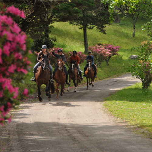 Cantering on the lake ride. Azores.