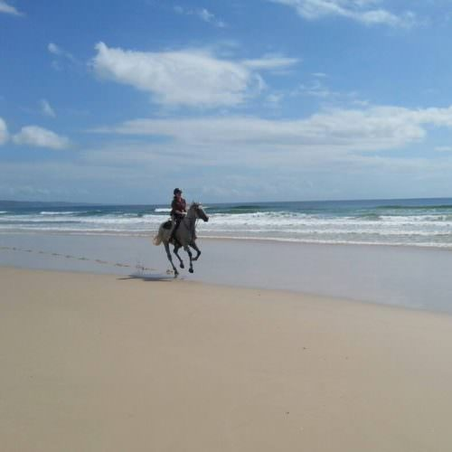 horse cantering on a beach
