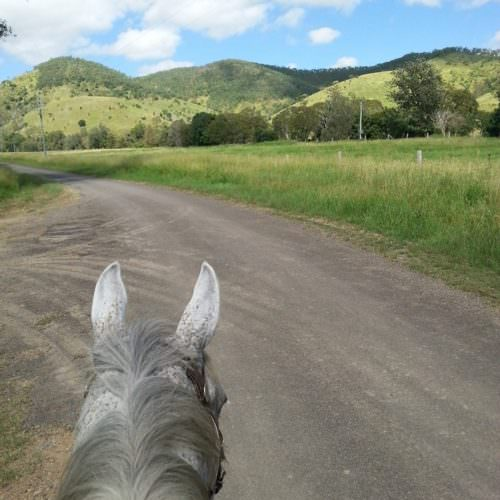 between the ears. View from the saddle