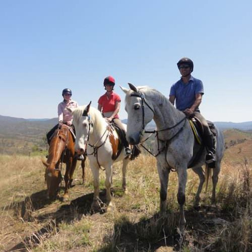 Horses being ridden in the sunshine on a riding holiday in Australia