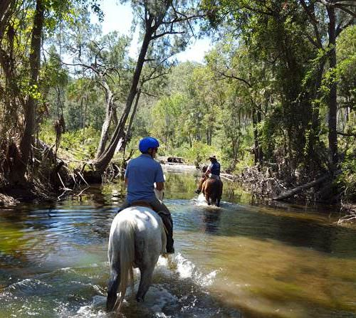 Horses being ridden through a creek in Australia