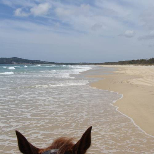 beach riding. Horse splashing through the waves