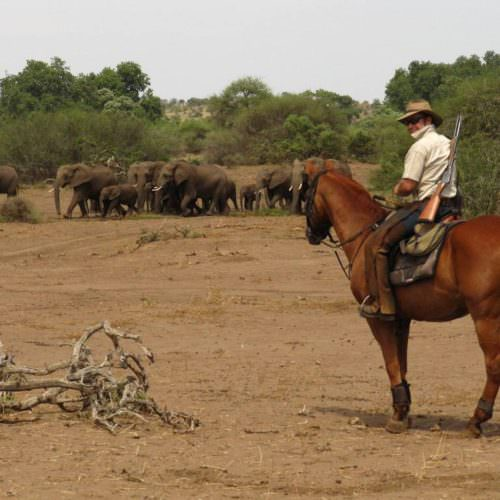 Tuli Trail mobile horseback safari holiday. Riding in Botswana. Horses and elephant.