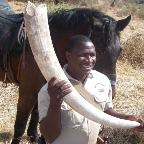 Tuli Trail mobile horseback safari holiday. Riding in Botswana. Elephant tusk and horse.