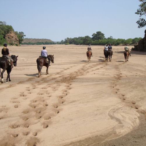 Tuli Trail mobile horseback safari holiday. Riding in Botswana. Horses walking along dried Limpopo river bed.