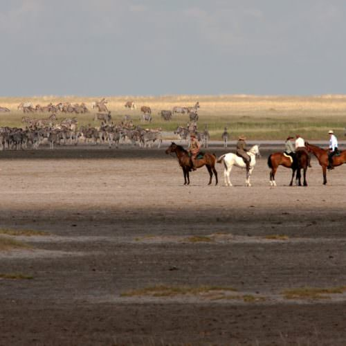 The Kalahari Riding Safari takes you into the Makgadikgadi salt pans of Botswana. Horses and zebra.
