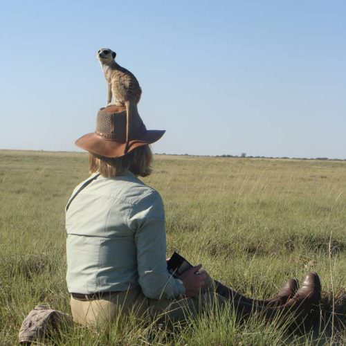 Meerkats in Botswana. Riding Safaris