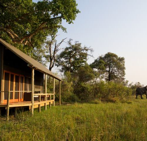 Kujwana riding safari exploring the western region of Botswana's Okavango Delta. Tented camp. Elephant.