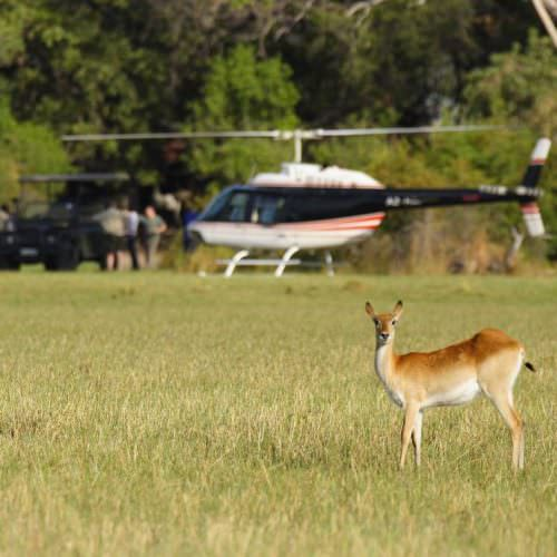 Kujwana riding safari exploring the western region of Botswana's Okavango Delta. Helicopter