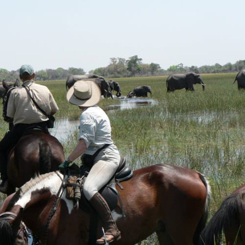 Kujwana riding safari exploring the western region of Botswana's Okavango Delta. Horses and elephant.