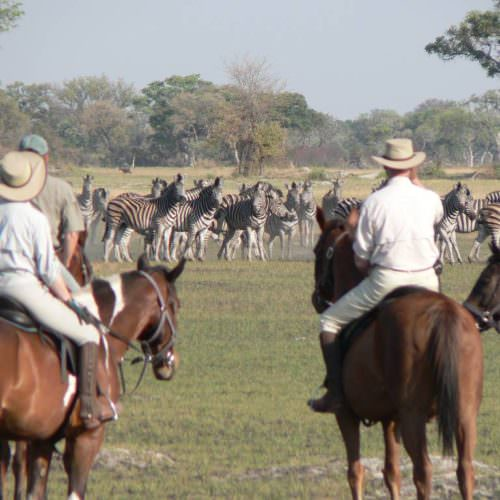 Kujwana riding safari exploring the western region of Botswana's Okavango Delta. Horses and zebra.