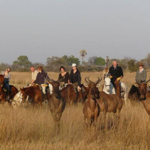 In The Saddle. Horse Riding Safari Holiday at Macatoo, Okavango Delta, Botswana. Giraffe and horses.