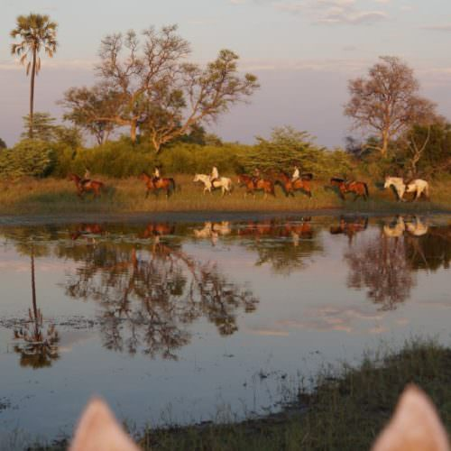 In The Saddle. Riding Safari at Macatoo, Okavango Delta, Botswana. Horses at sunset.