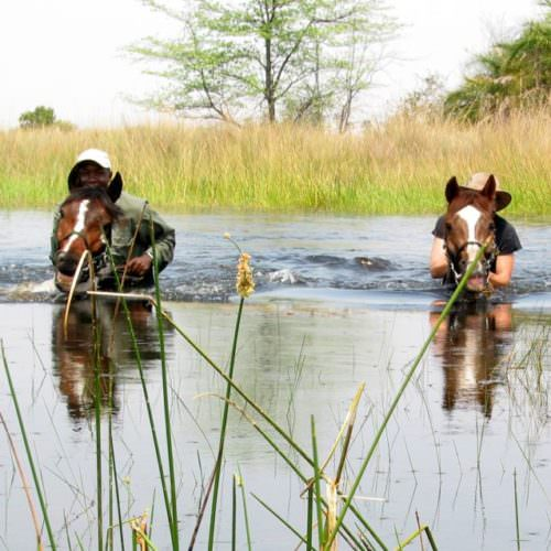 In The Saddle. Riding Safari at Macatoo, Okavango Delta, Botswana. Horses swimming.