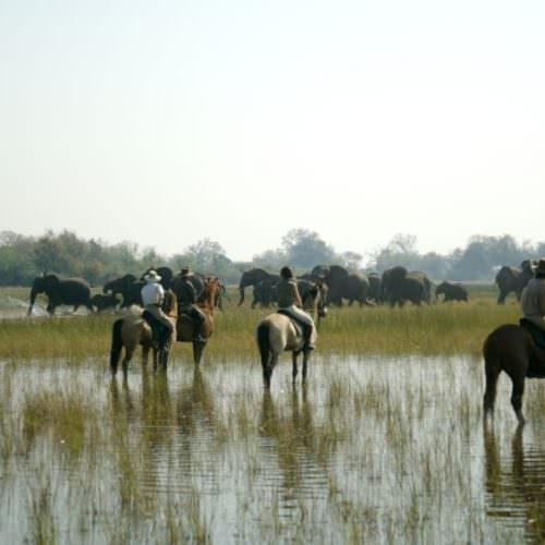 In The Saddle. Horse Riding Safari Holiday at Macatoo, Okavango Delta, Botswana. Elephant.
