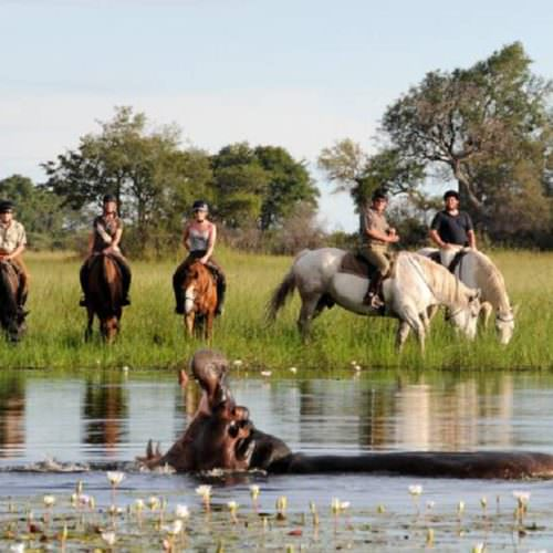 In The Saddle. Riding Safari Holiday at Macatoo, Okavango Delta, Botswana. Hippo and horses.