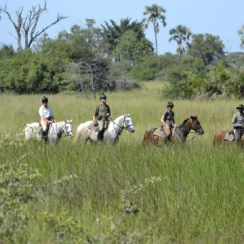 In The Saddle. Riding Safari at Macatoo, Okavango Delta, Botswana. Horses