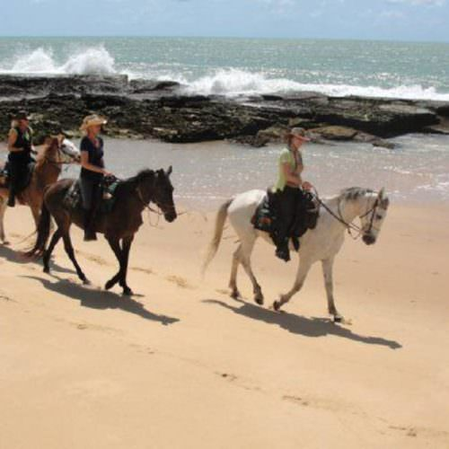 Riding Holidays in Brazil. Beach riding in Bahia. Horses along the ocean