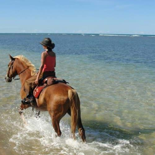 Riding Holidays in Brazil. Beach riding in Bahia. Horse and rider splashing along the ocean shore.