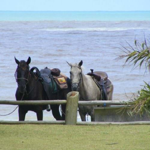 Riding Holidays in Brazil. Beach riding in Bahia. Horses relaxing by the ocean.