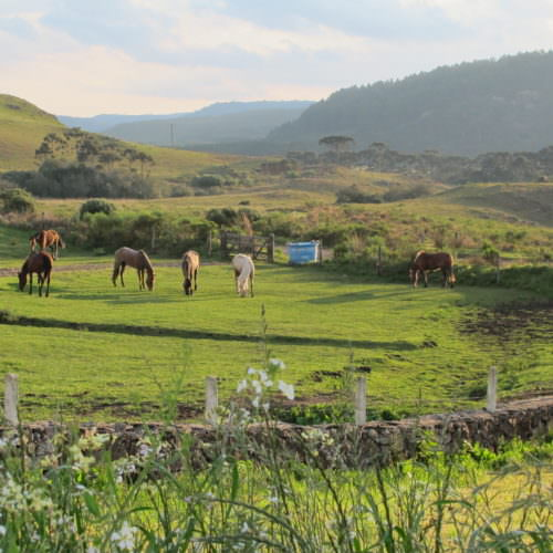 Riding Holidays in Brazil. Trail riding vacation. Horses grazing.