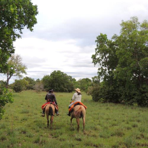 Trail riding holidays in the Pantanal, Brazil. Horses