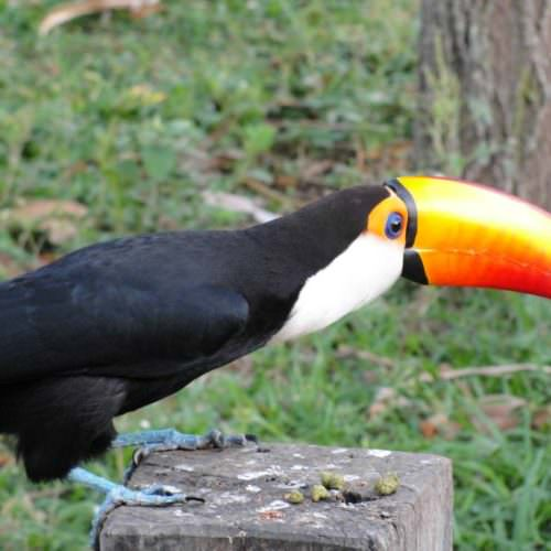 Trail riding holidays in the Pantanal, Brazil. Toucan