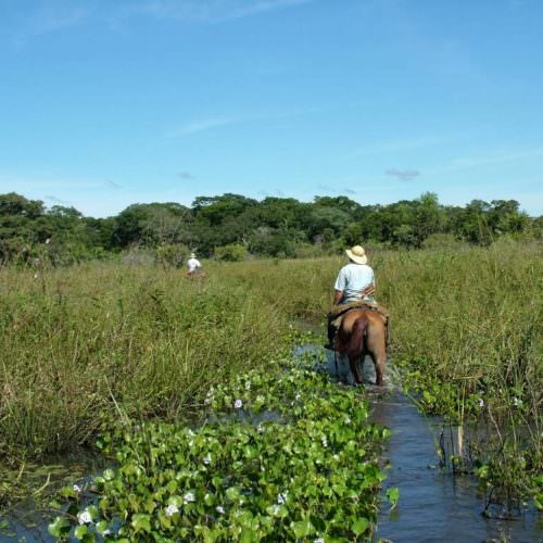 Trail riding holidays in the Pantanal, Brazil. Horses in the wetlands.