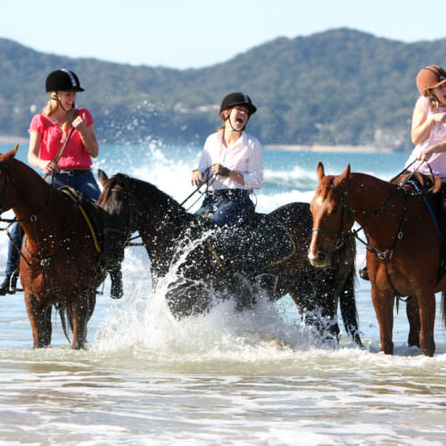 horses splashing in the sea on a beach riding holiday