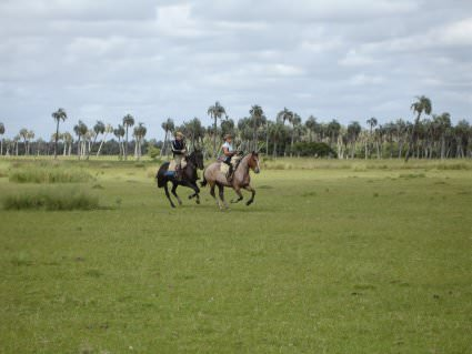 Uruguay - palms
