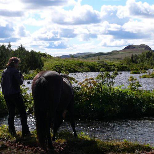 Iceland horse drinking