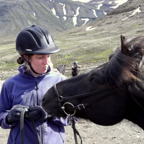 Iceland my horse