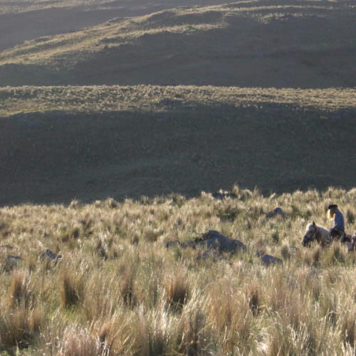 Horseback riding in Argentina. Los Potreros.