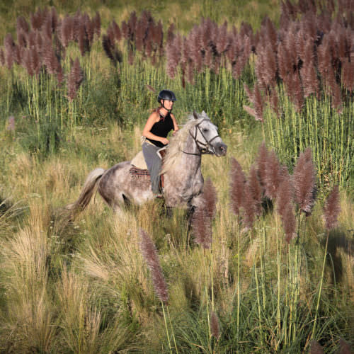 Riding, pampas grass