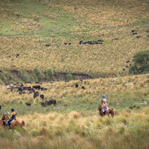 Cattle round-up, Argentina