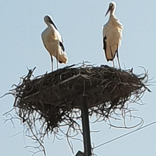 birdlife in Portugal