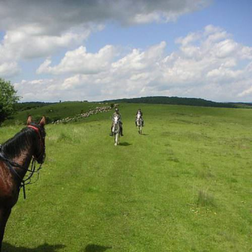Riding holidays in Transylvania with In The Saddle. Horses cantering